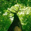specialist-tree-service-min