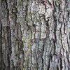 tree-bark-min
