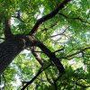 tree-specialist-min